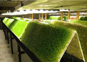 Buy True Aeroponics Aeroponic Units System Biocontrols