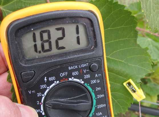 Multimeter and leaf sensor on grape